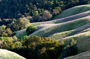 South-SLopes-of-Mt-Diablo2